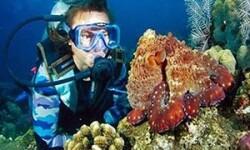 Лучшие места для дайвинга в Египте: исследуем коралловые пляжи и затонувшие галеоны