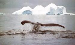 Путешествие на Северный полюс на ледоколе — захватывающий тур во льдах