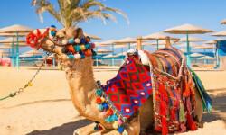 Правила въезда в Египет для российских туристов в 2021 году