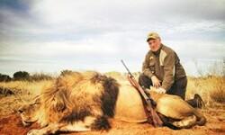 Охота на свирепых львов с верным Магнумом и собакой — «игра» не для слабаков