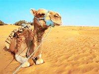 Какие сувениры можно привезти из Туниса