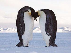 Отзыв Илоны о поездке в Антарктиду