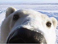 Незабываемый тур в Арктику