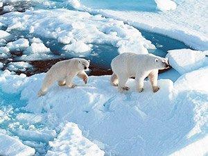Экзотическое путешествие в Арктику
