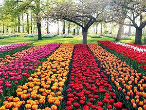 Столица тюльпанов - Амстердам