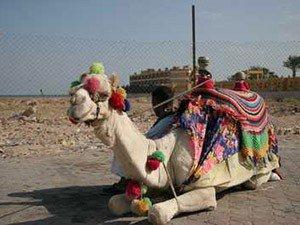 Возможные проблемы с арендой авто в Хургаде и Шарм-эль-Шейхе