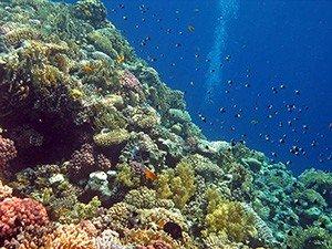 Популярное место для дайвинга - коралловый риф Гордон